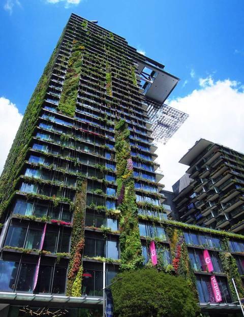 Jardines verticales - Plantas para setos altos ...